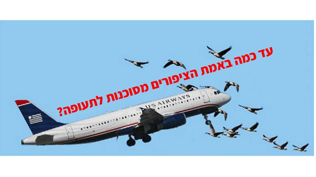 ציפורים ותעופה – האם ציפור יכולה להפיל מטוס?